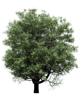 Free revit Families trees